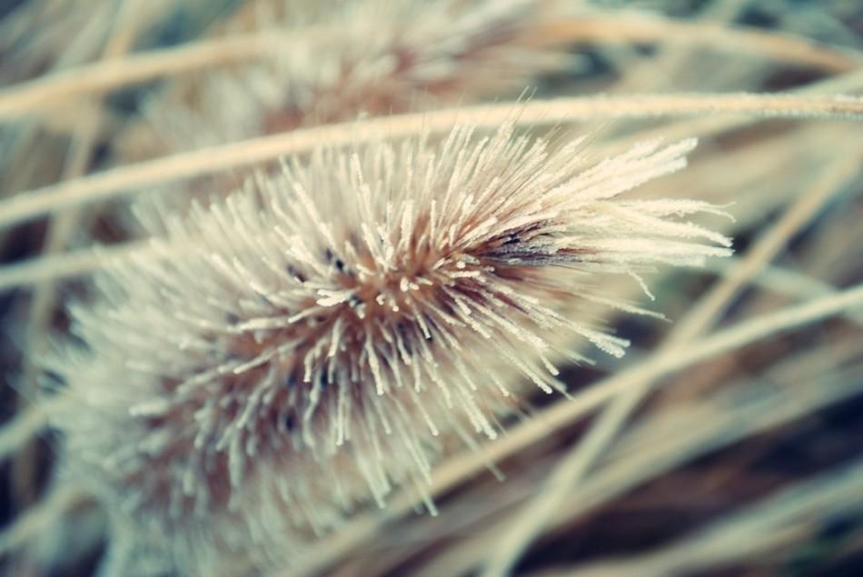 raureif201110_4