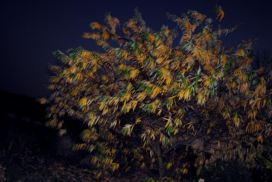 treeherbst3