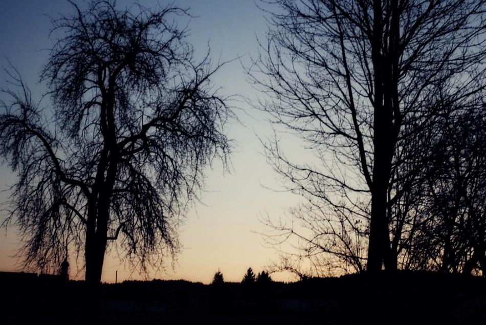 treesherbst1