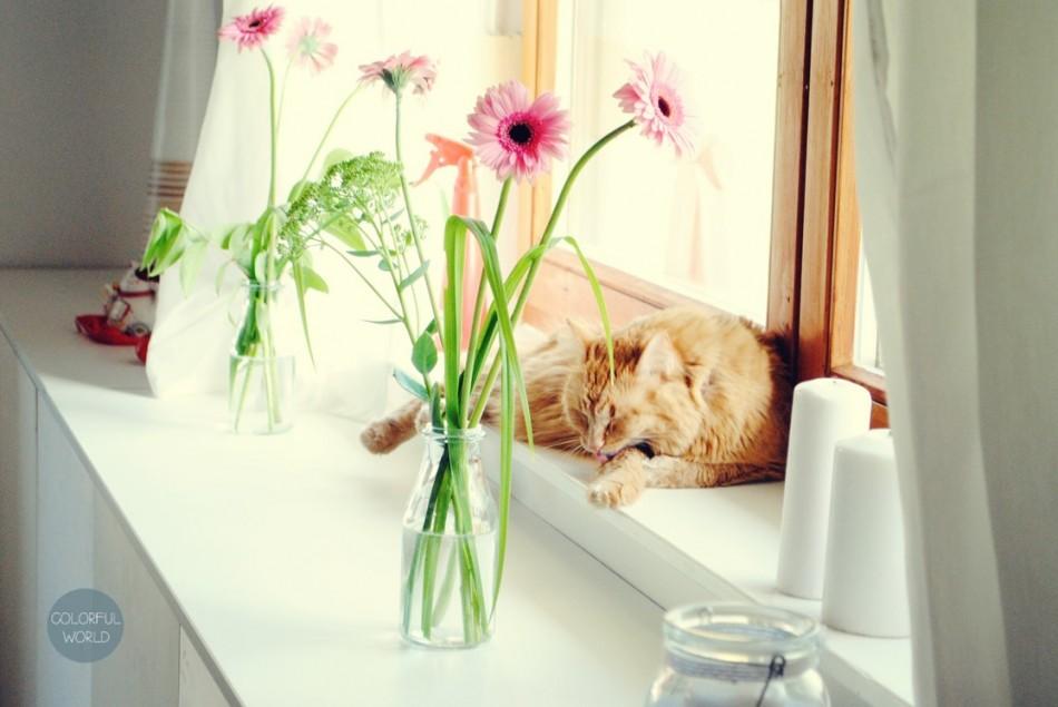 housewarming90_cat